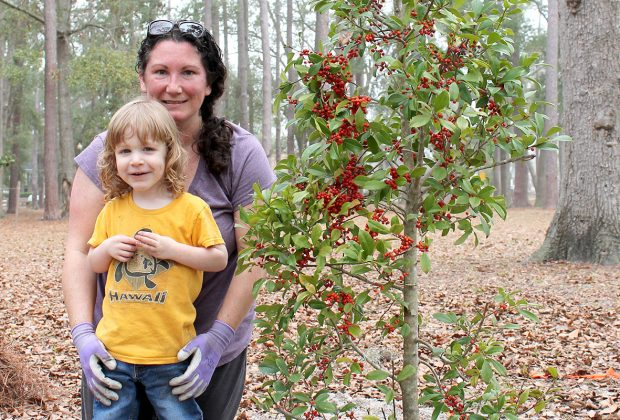 Melanie and Walter Dobbins plant a Palatka holly in Boone Park near the playground.