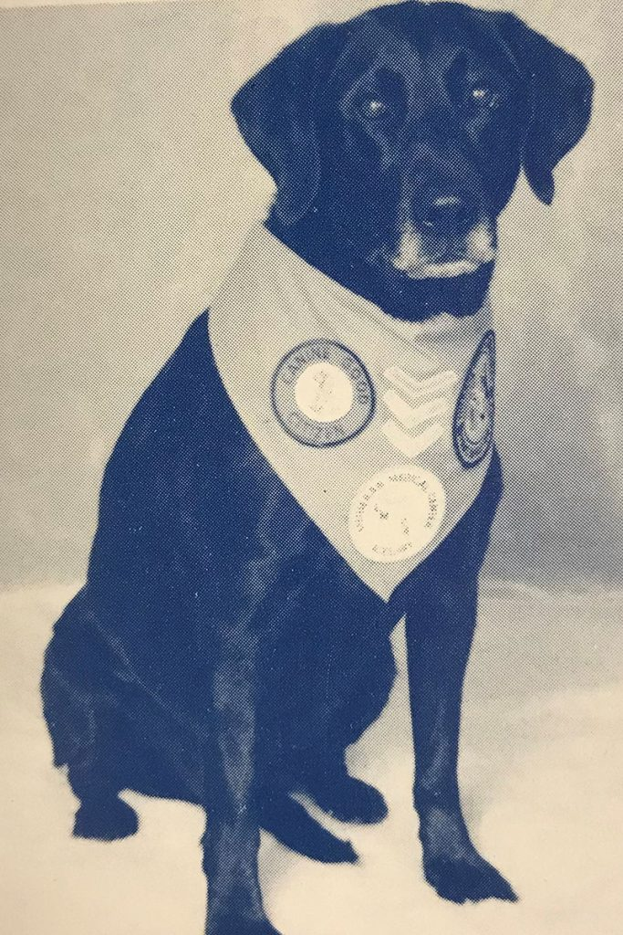 Wolfson Children's Hospital's original therapy dog, Jenni, owned by Linda Dunn