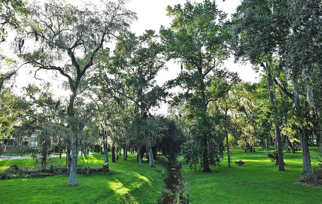 RAP, city officials discuss removal of 75 trees from Willowbranch Park